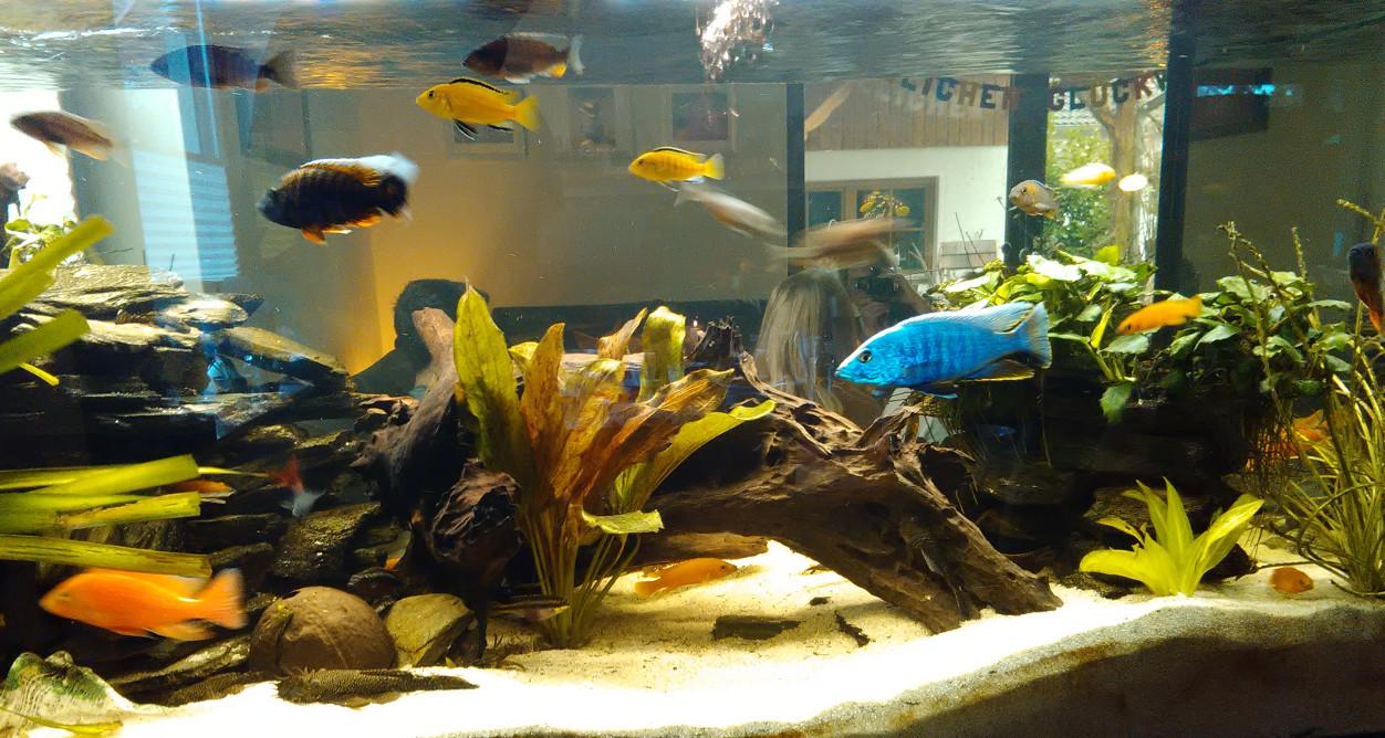 Aquarium_2016_02